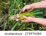 a bunch of fresh new green...   Shutterstock . vector #273974384