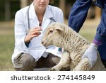 Stock photo afraid lamb in workers hands waiting for vaccination 274145849