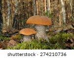 leccinum versipelle  known as... | Shutterstock . vector #274210736