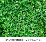 clover background | Shutterstock . vector #27441748