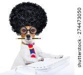 Jack Russell Secretary Dog...