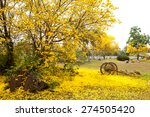 Tabebuia Chrysotricha Yellow...