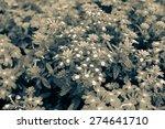 flowers    Shutterstock . vector #274641710