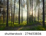 Sunset In The Forest  Vector
