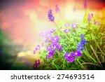 Purple Garden Flowers In Back...