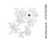 sweet briar or rosa rubiginosa... | Shutterstock .eps vector #274742780
