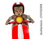 funny cat driving a moped | Shutterstock . vector #274765598