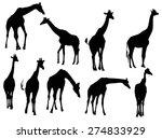Illustration With Nine Giraffe...