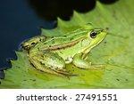 frog | Shutterstock . vector #27491551