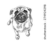 pug dog. hand drawn. vector... | Shutterstock .eps vector #274924298