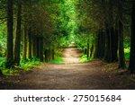 walkway lane path with green...   Shutterstock . vector #275015684