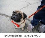 Stock photo pug 275017970