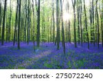 Beautiful Spring Forest With...