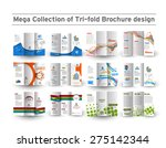 business infographic tri fold...