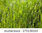 Macro Image Of Green Grass...