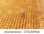 yellow beautiful honeycomb with ... | Shutterstock . vector #275240960