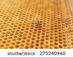 yellow beautiful honeycomb with ... | Shutterstock . vector #275240960
