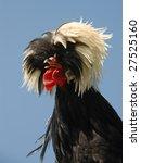 Fancy Hairdo Of A Polish...