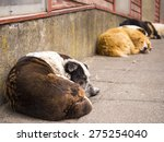 Sleeping Dogs In In Patagonia