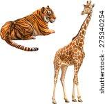 giraffe standing looking front... | Shutterstock .eps vector #275340254