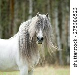 Stock photo white andalusian shaggy horse portrait in windy spring day 275386523
