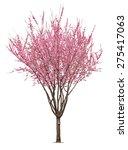 entire flowering sacura tree... | Shutterstock . vector #275417063