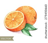 hand drawn watercolor... | Shutterstock .eps vector #275450660