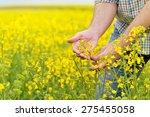 Farmer Hands In Oilseed...