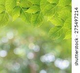 soft focus natural green...   Shutterstock . vector #275497214