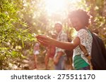 woman examining leaves on plant ... | Shutterstock . vector #275511170