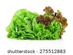 Oakleaf Lettuce  Corrugated...