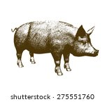 vector illustration big pig... | Shutterstock .eps vector #275551760