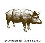 Vector Illustration Big Pig...