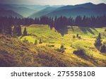 mountain forest landscape and... | Shutterstock . vector #275558108