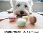 Dog With Macaroons