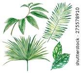set of watercolor tropical... | Shutterstock .eps vector #275578910
