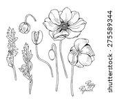 image fragments poppy flowers.... | Shutterstock .eps vector #275589344