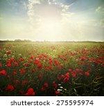 Stock photo  landscape poppy flowers in the sky 275595974