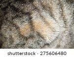 Close Up Image Of Cat Fur  Gre...