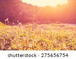 sunny meadow | Shutterstock . vector #275656754