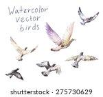 pigeons watercolor  vector set... | Shutterstock .eps vector #275730629