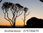 Small photo of Yaupon Trees at Fort Fisher, NC/ Waiting for the Sun to Rise