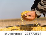 corn seed in hand of farmer.... | Shutterstock . vector #275773514