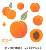 apricot. vector illustration | Shutterstock .eps vector #275844188