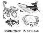 nautical set  sea creators.... | Shutterstock .eps vector #275848568