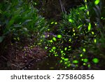 the forest is lit up by the... | Shutterstock . vector #275860856