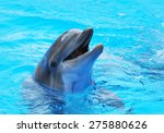 dolphins swim in the pool | Shutterstock . vector #275880626