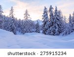 Winter Forest In Julia Alps...