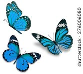 three blue butterfly  isolated... | Shutterstock . vector #276006080