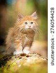 Stock photo little red kitten 276054428